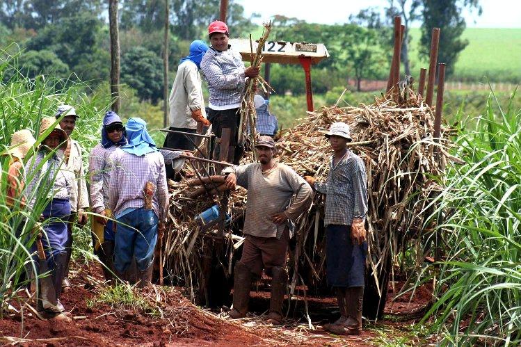 Hay dos agriculturas en ti (3): Pobrecitas las azucareras